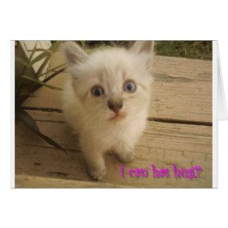 I can has hug?  Cute kitty. Greeting Card