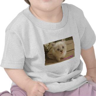 I can has hug?  Cute kitty. Shirts