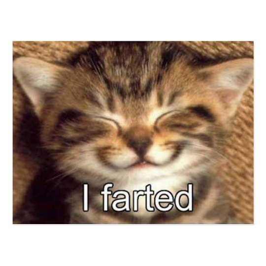 I farted kitten postcard