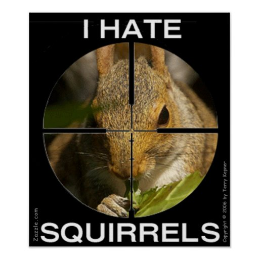 I Hate Squirrels - In the Scope - Poster