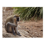 I have an Itch - Spider Monkey Postcard