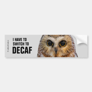 I Have to Switch to Decaf: Wide-Eyed Saw Whet Owl Bumper Sticker