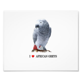 I heart African Grey Photographic Print