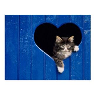 """I """"Heart"""" Cats Postcard"""