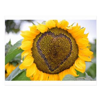 I Heart Sunflower Postcard