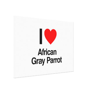 i love african gray parrot canvas prints