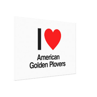 i love american golden plovers stretched canvas print