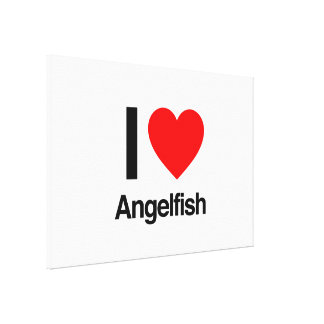 i love angelfish stretched canvas print