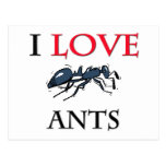 I Love Ants Postcard