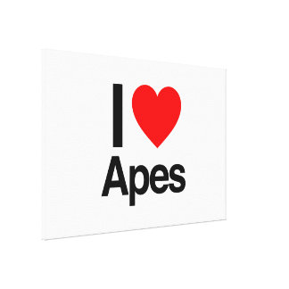 i love apes gallery wrapped canvas
