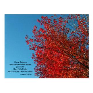 I Love Autumn Postcard
