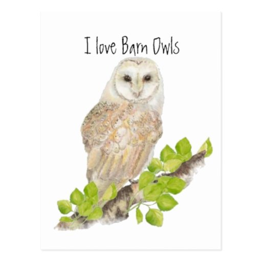 I love Barn Owls - Bird Post Card