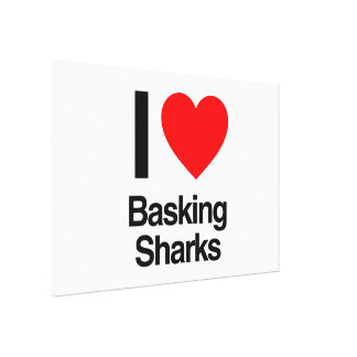 i love basking sharks gallery wrapped canvas