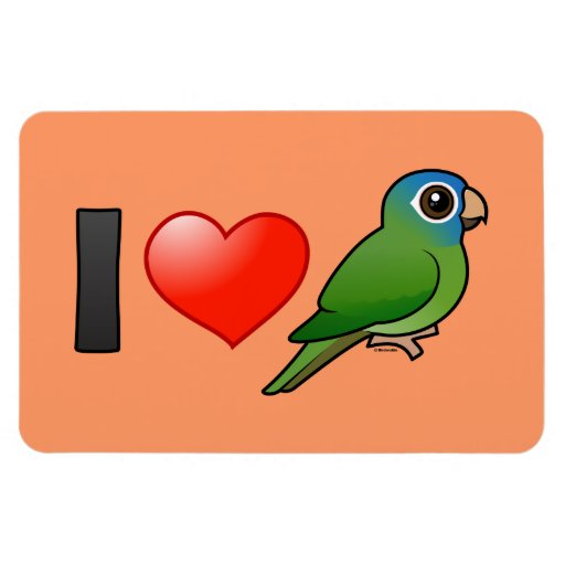 I Love Blue-crowned Conures Flexible Magnet