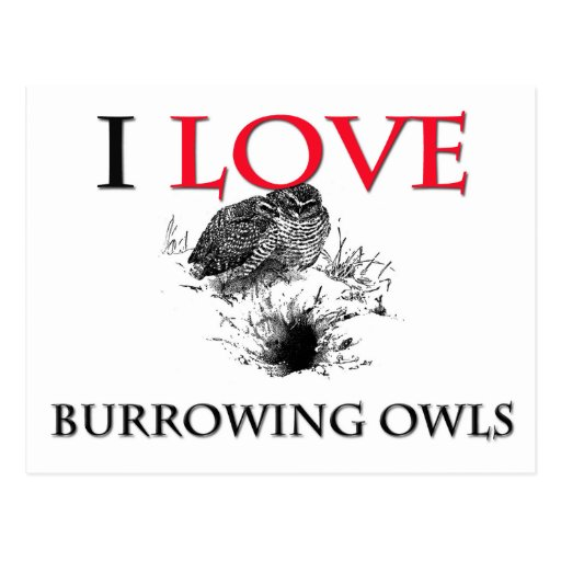 I Love Burrowing Owls Post Cards
