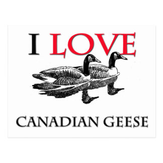 I Love Canadian Geese Postcard