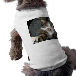 I love cats sleeveless dog shirt