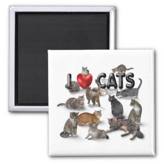 I love Cats Square Magnet