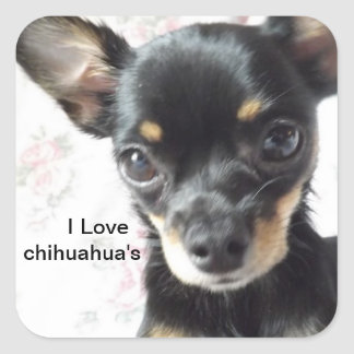 I love chihuahua's Stickers