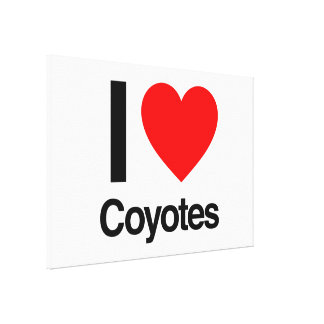 i love coyotes stretched canvas prints
