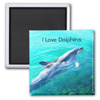 I Love Dolphins Magnet