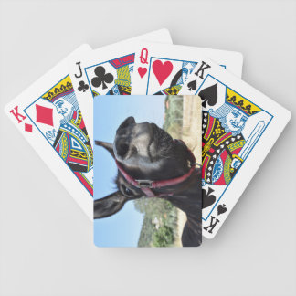 I Love Donkeys! Bicycle Playing Cards