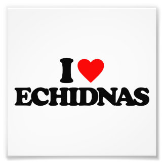 I LOVE ECHIDNAS PHOTO