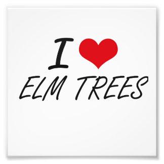 I love ELM TREES Photograph