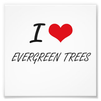 I love EVERGREEN TREES Photo Print