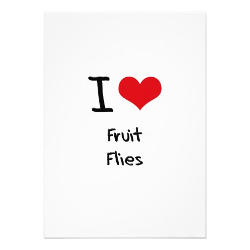 I Love Fruit Flies Cards