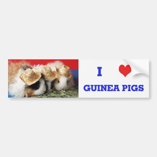 I Love Guinea Pigs Bumper Sticker