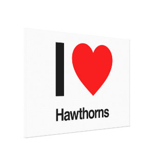 i love hawthorns canvas prints