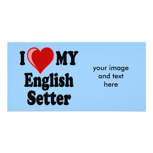 I Love (Heart) My English Setter Dog Picture Card