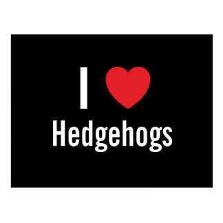 I love Hedgehogs Postcard