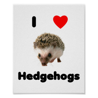 I love hedgehogs poster