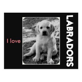 I love Labradors Postcard