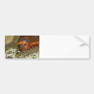 I Love Lichen Bumper Sticker