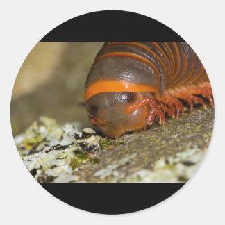 I Love Lichen Round Sticker