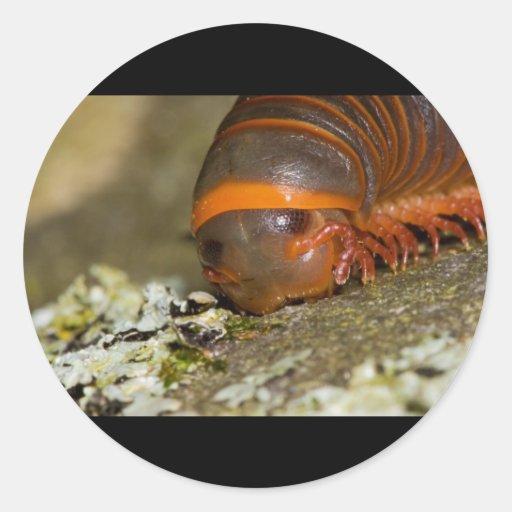 I Love Lichen Round Stickers