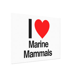 i love marine mammals gallery wrap canvas