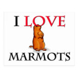 I Love Marmots Postcard