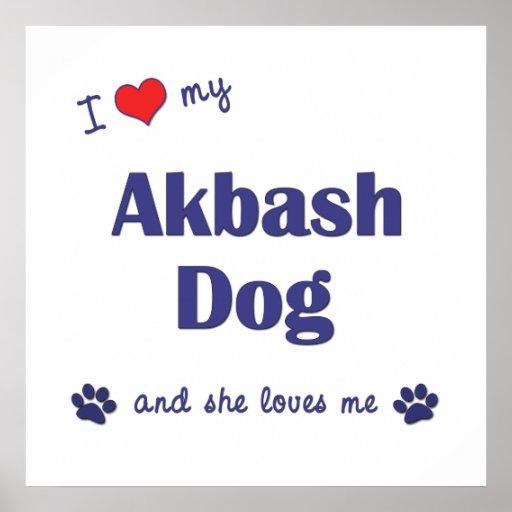 I Love My Akbash Dog (Female Dog) Print