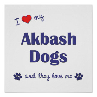 I Love My Akbash Dogs (Multiple Dogs) Posters