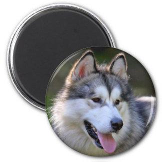 I Love My Alaskan Malamute Gifts & Novelties 6 Cm Round Magnet