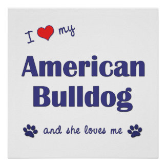 I Love My American Bulldog (Female Dog) Poster