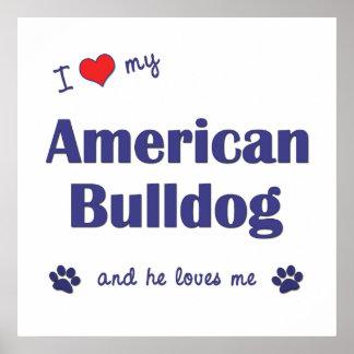 I Love My American Bulldog (Male Dog) Poster