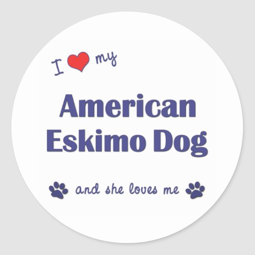 I Love My American Eskimo Dog (Female Dog) Stickers