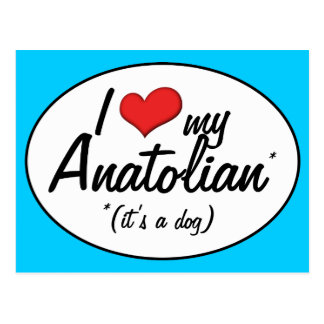 I Love My Anatolian (It's a Dog) Postcard