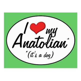 I Love My Anatolian (It's a Dog) Postcard