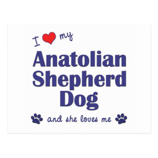 I Love My Anatolian Shepher Dog (Female Dog) Postcard